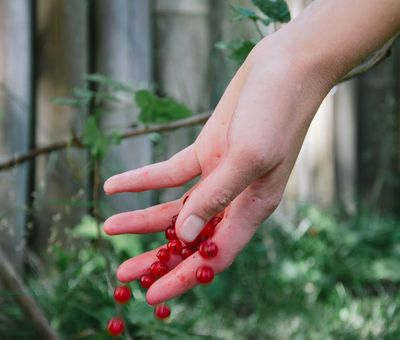 hand holding red berries